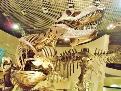 ティラノサウルス 地球館2019