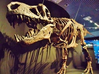 恐竜博 2019 ティラノサウルス