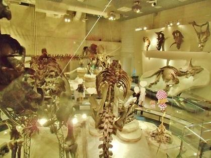 恐竜ナイト ミュージアム