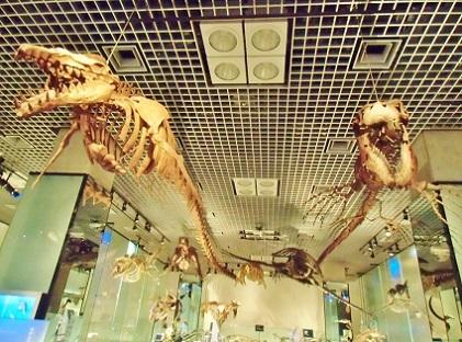 右 ティロサウルスと 左 バシロサウルス