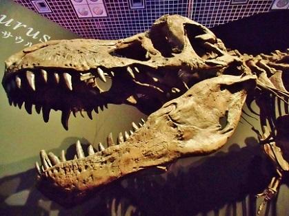 恐竜博 2019 ティラノサウルス1