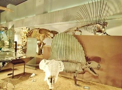 上 エダフォサウルス 下 ディメトロドン