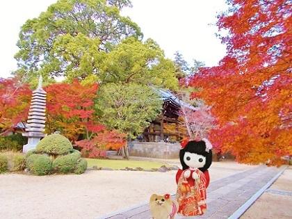 東漸寺の美しい紅葉a
