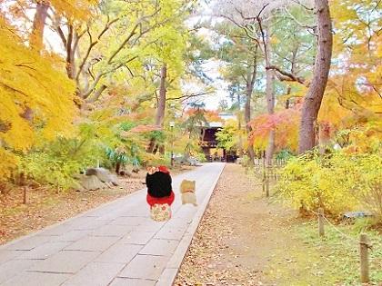 東漸寺の紅葉の参道b