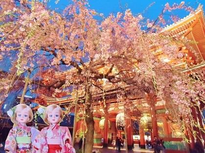 浅草寺 夜のしだれ桜2019