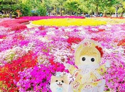 里見公園 ナデシコ2019