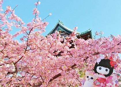 河津桜も咲いていました2020