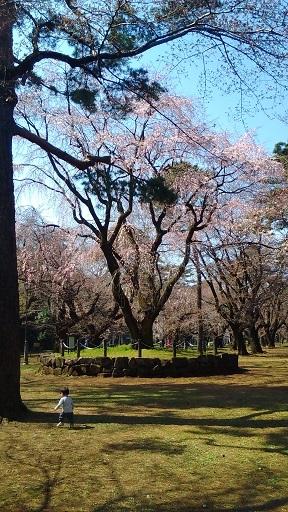 大宮公園枝垂桜20200319