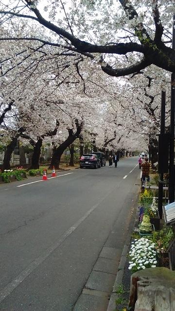 谷中墓地20200327