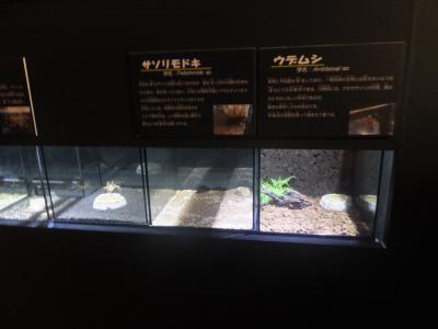 2大阪_(20)_convert_20190901082826