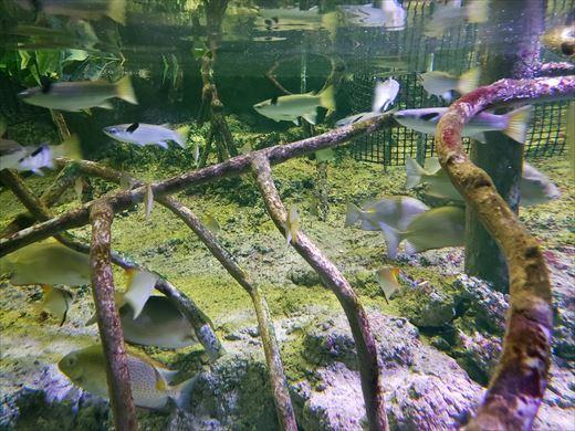 美ら海水族館 (6)
