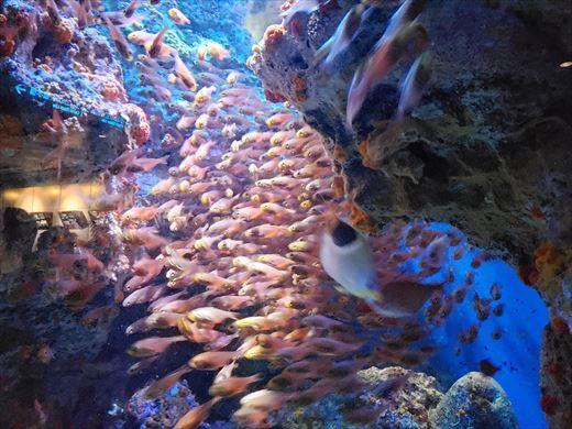 美ら海水族館 (8)