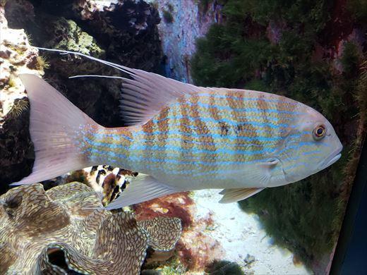 美ら海水族館 (9)