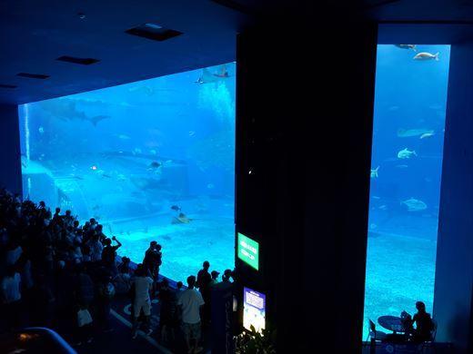 美ら海水族館 (14)