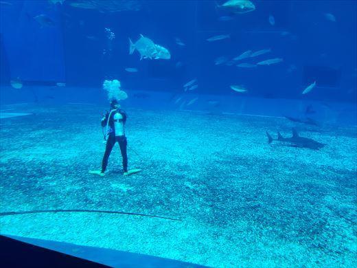 美ら海水族館 (16)