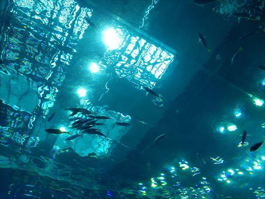 美ら海水族館 (20)