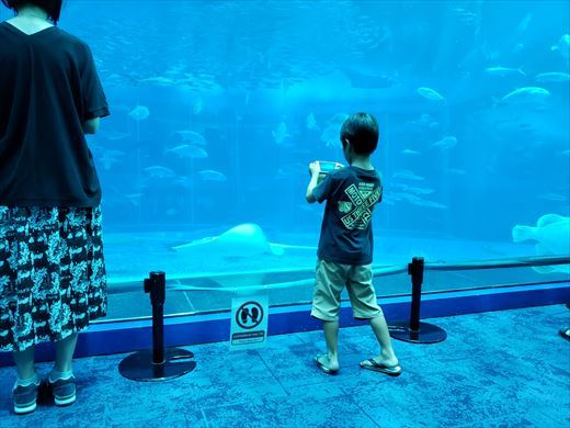 美ら海水族館 (21)