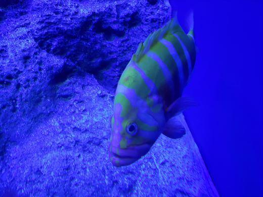 美ら海水族館 (23)