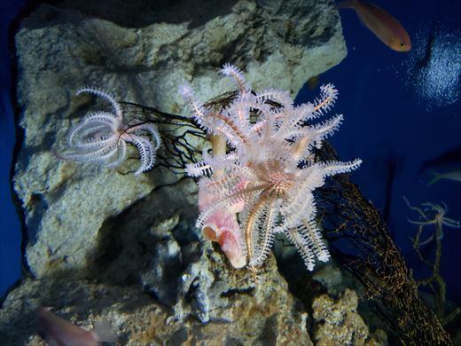 美ら海水族館 (24)