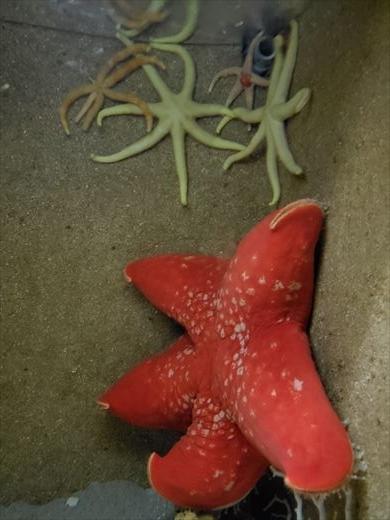 美ら海水族館 (26)