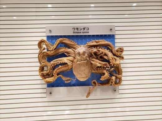 美ら海水族館 (31)