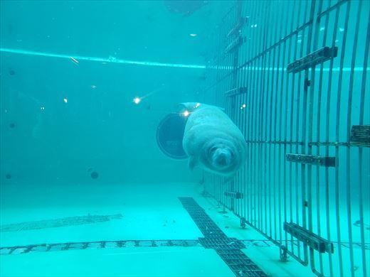 美ら海水族館 (32)