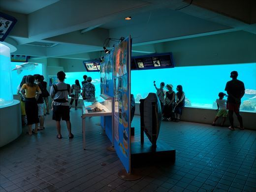 美ら海水族館 (33)