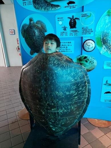 美ら海水族館 (35)