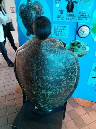 美ら海水族館 (36)