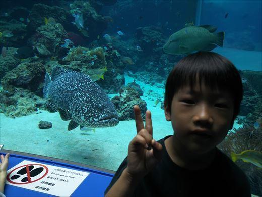 美ら海水族館 (45)