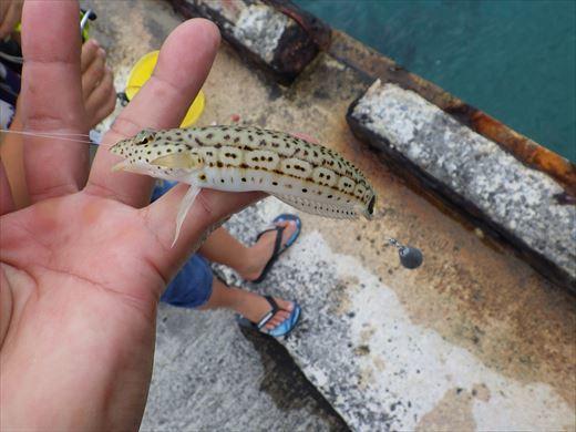 もとぶ元気村で釣り (3)