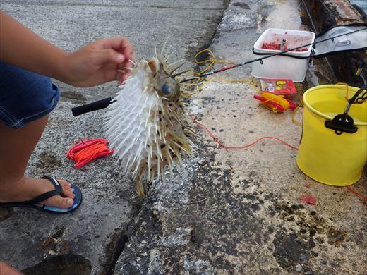 もとぶ元気村で釣り (6)