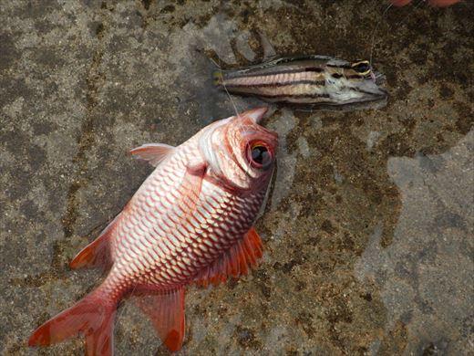 もとぶ元気村で釣り (14)