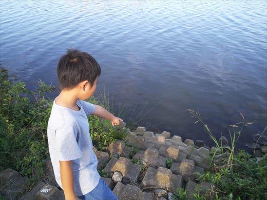 中川で釣る (5)