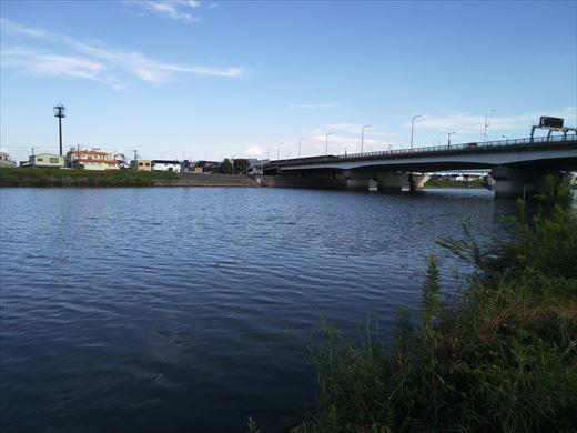 中川で釣る (6)