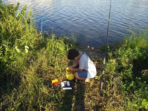 中川で釣る (11)