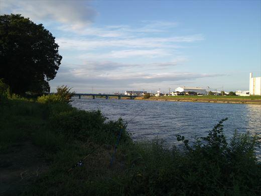 中川で釣る (18)