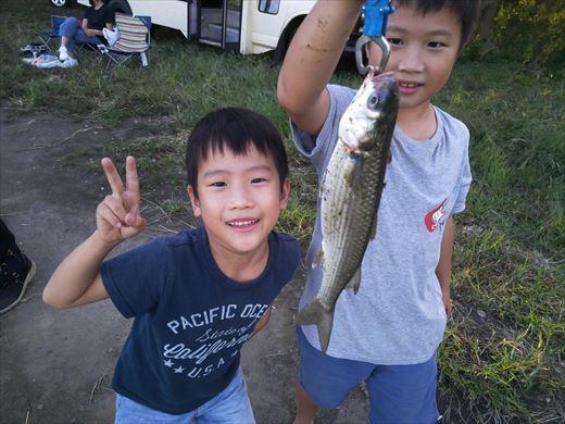 中川で釣る (19)