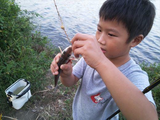 中川で釣る (21)