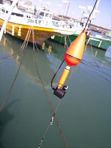 水中カメラ実践 (3)