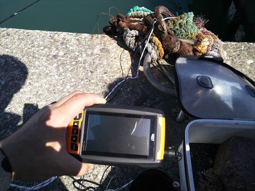 水中カメラ実践 (4)