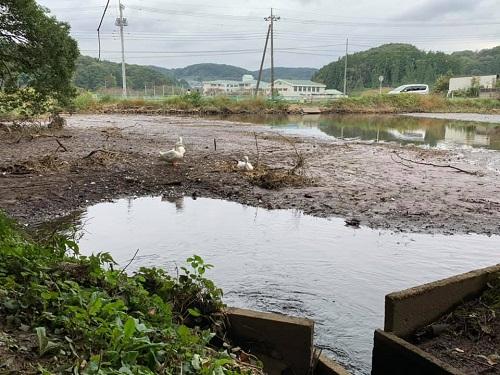 台風19号による被害状況 調査 18日 宇都宮市⑬