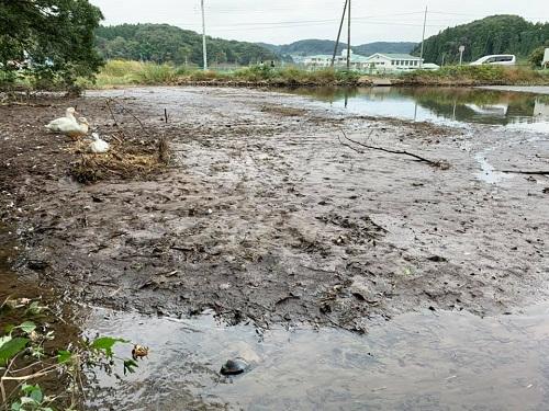 台風19号による被害状況 調査 18日 宇都宮市⑭