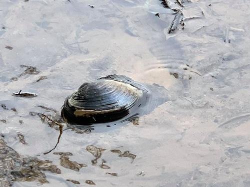 台風19号による被害状況 調査 18日 宇都宮市⑮