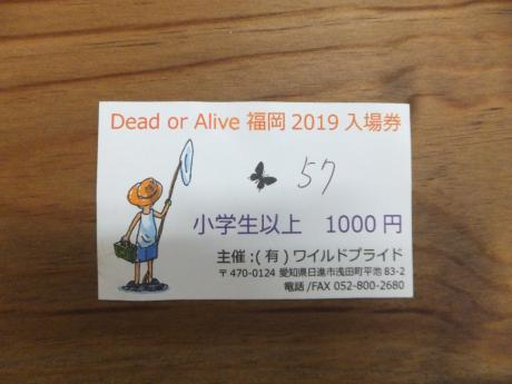 Doad of Alive 福岡の先行入場番号。。。