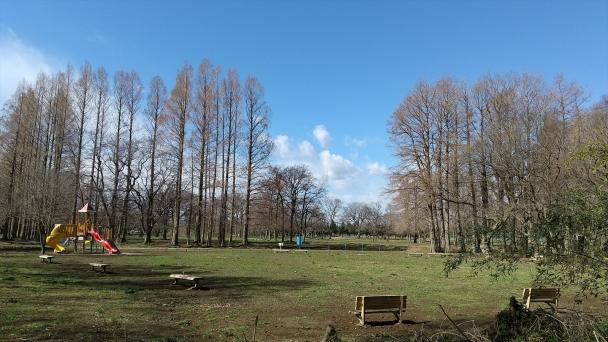 秋ヶ瀬子供の森20200218