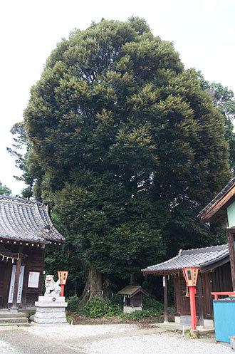 190724下谷氷川神社椎①