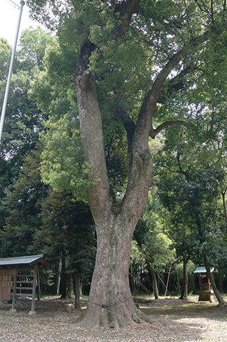 190827菖蒲町神明神社②