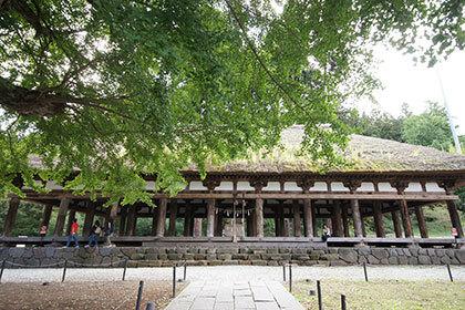 191006新宮熊野神社大銀杏④