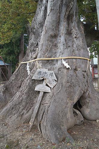191006新宮熊野神社欅⑤